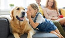 Wohnungsgenossenschaft Einheit Calbe eG - Haustiere